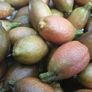 Microcitrus, Citron Caviar