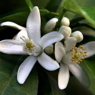 bigar fleurs