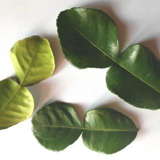 combava feuilles